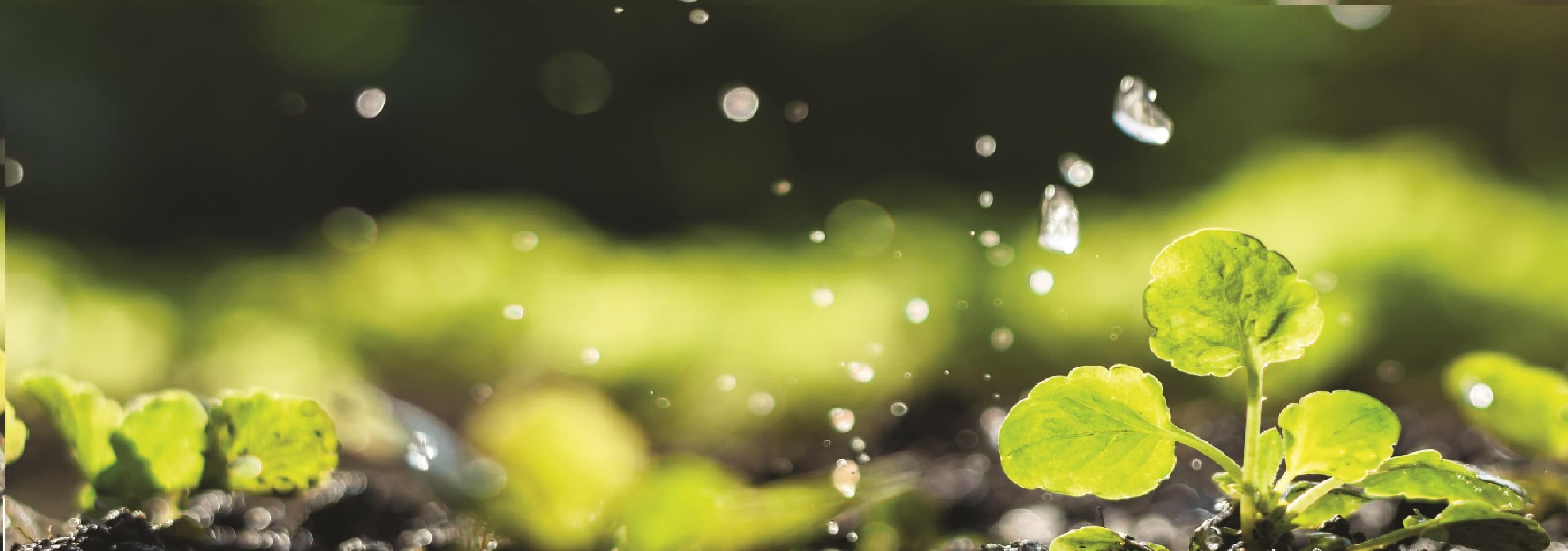 Amity Insight: Sustainability